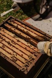včelí úl, plástve, včelař, včely, med